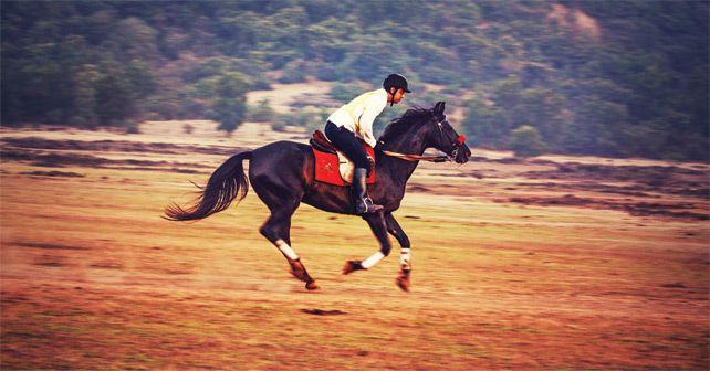 Horse Endurance Championship pic52